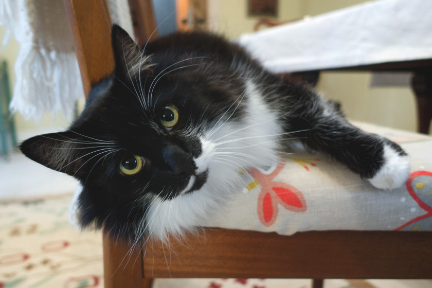 Cat laying on chair