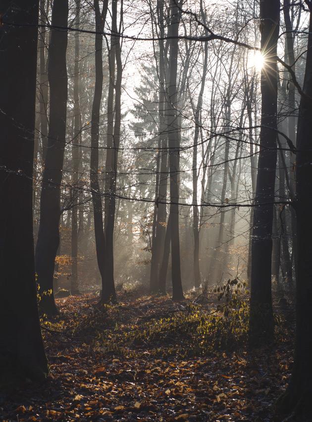 Golden light on trees
