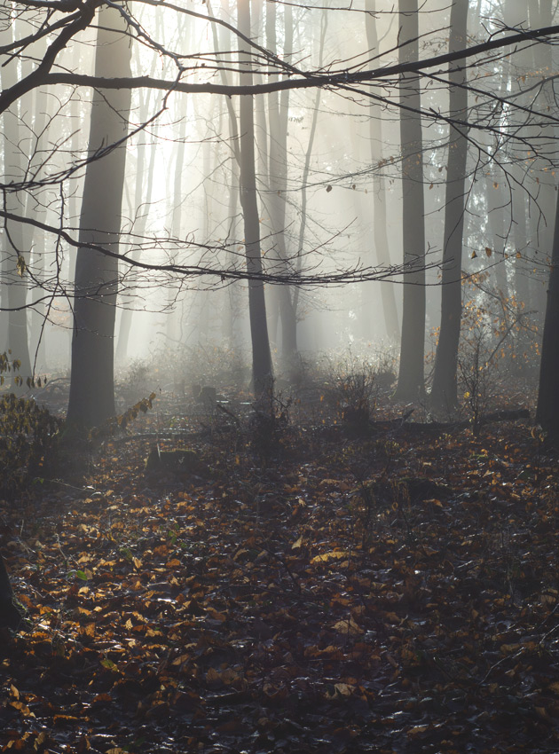 Sun casting shadows through trees