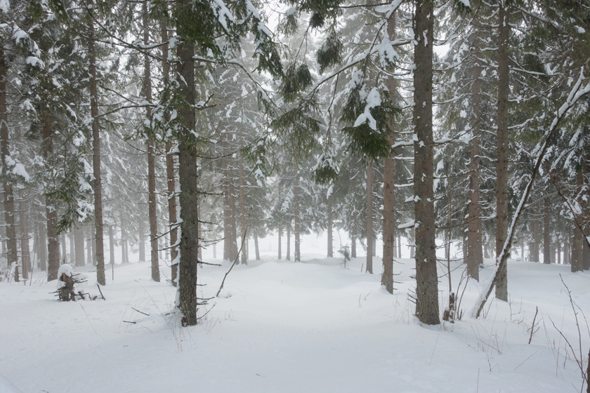 Mist in snowy forest