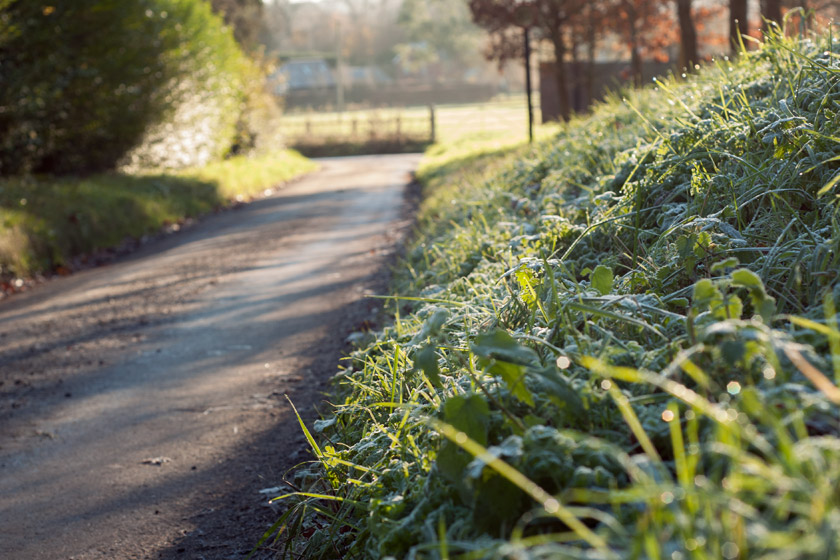Frosty lane in the sunshine