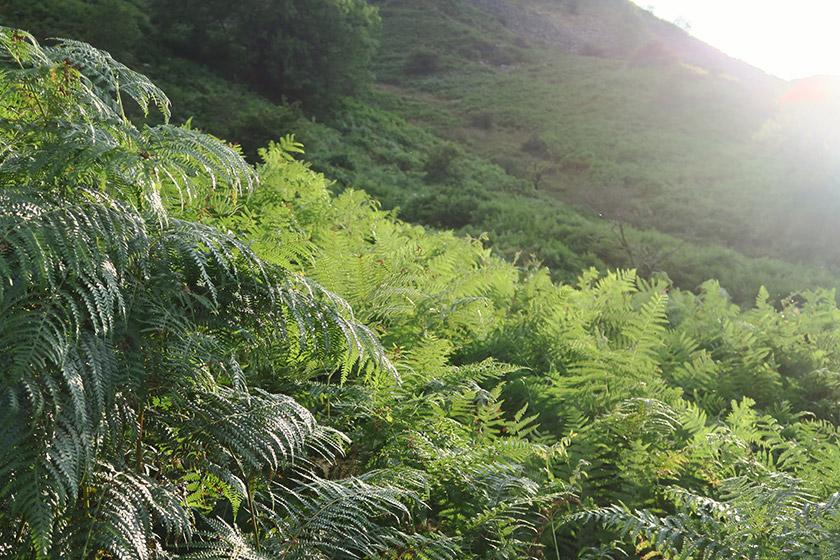 Ferns in the sunshine