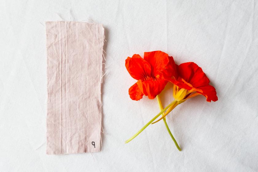 Pastel pink nasturtium dye