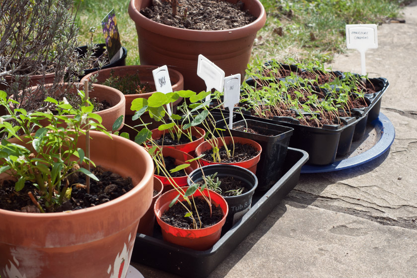 Small seedlings in the sun