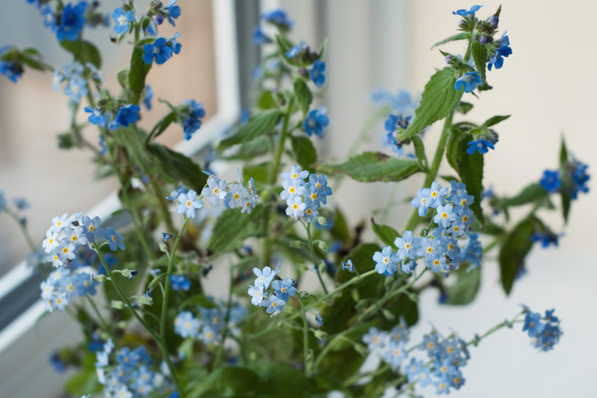 Blue flowers in jar