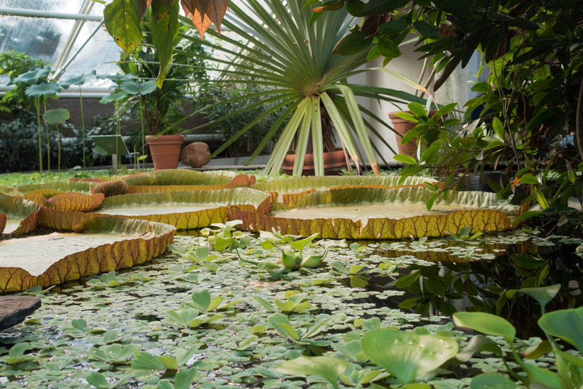 Tropical plants in glasshouse