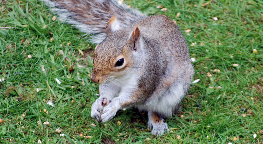 Squirrel sitting holding small nuts