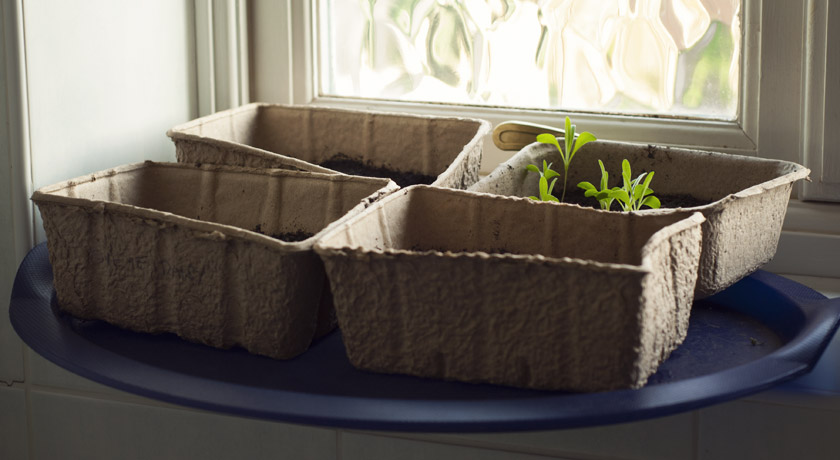Seed trays on the windowsill