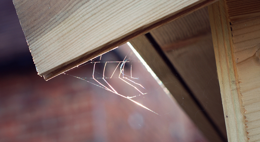 Spiders web hanging in the sun