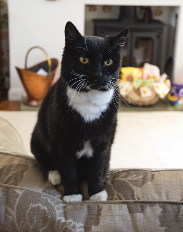 Black and white cat on sofa