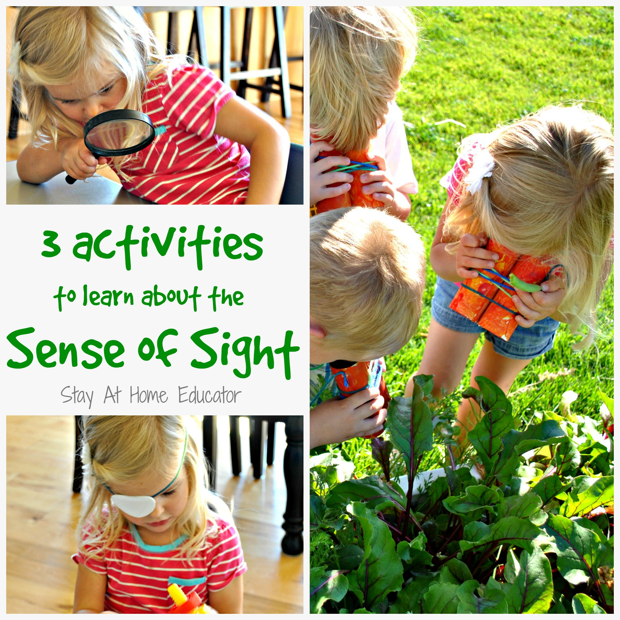 3 Activities To Learn About The Sense Of Sight Preschool Theme Five Senses