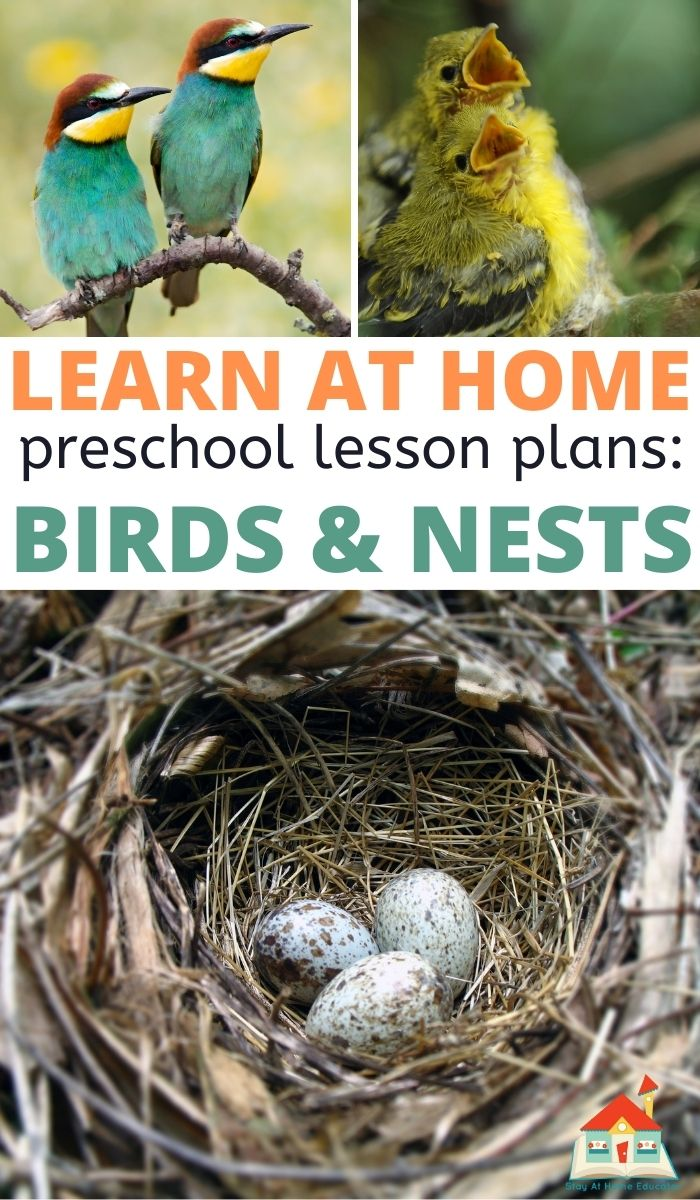 Birds Feathers & Nests Preschool Lesson Plans - Stay At ...