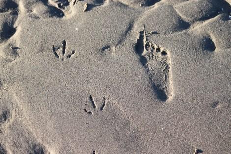 Foot prints in the sane.