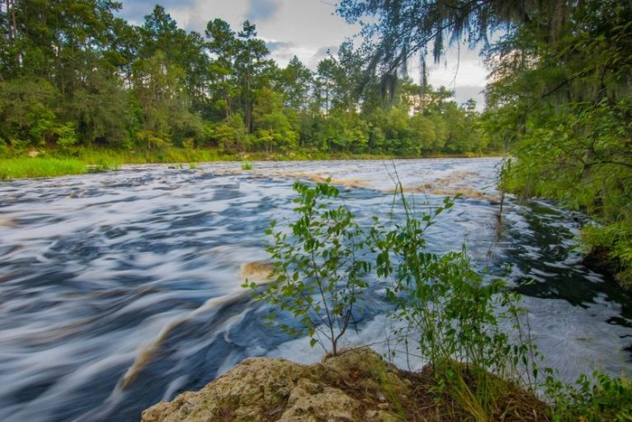 Rapids river Florida outdoors