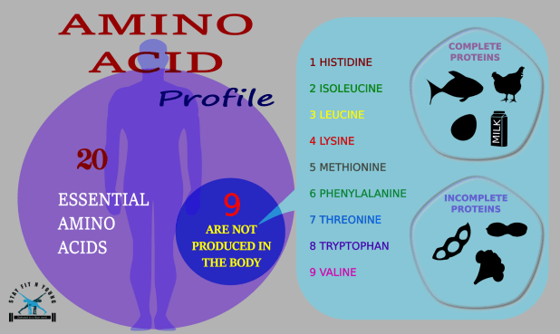 infographic-amino-acid-profile