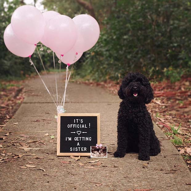 21 Valentines Day Pregnancy Announcement Ideas StayGlam