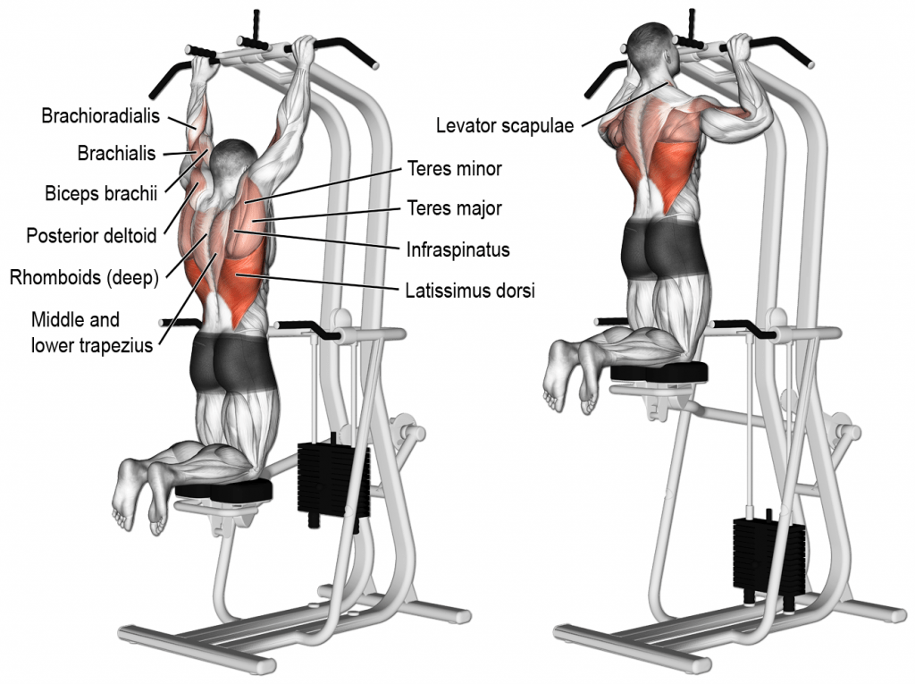 Best Compound Back Exercises