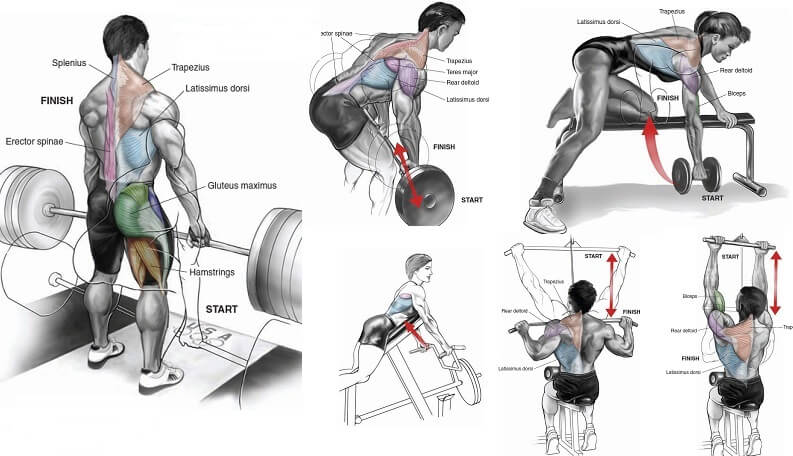 Best Back Workout Routine exercises