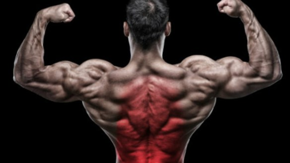 Best back exercises For Building Muscle