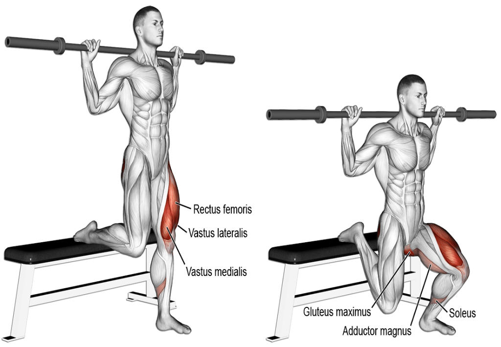 Bulgarian Split Squat - How to Perform it with Perfect Form