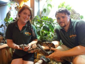 Other home-bred additions on the zoo farm have included four baby Royal Pythons (above)