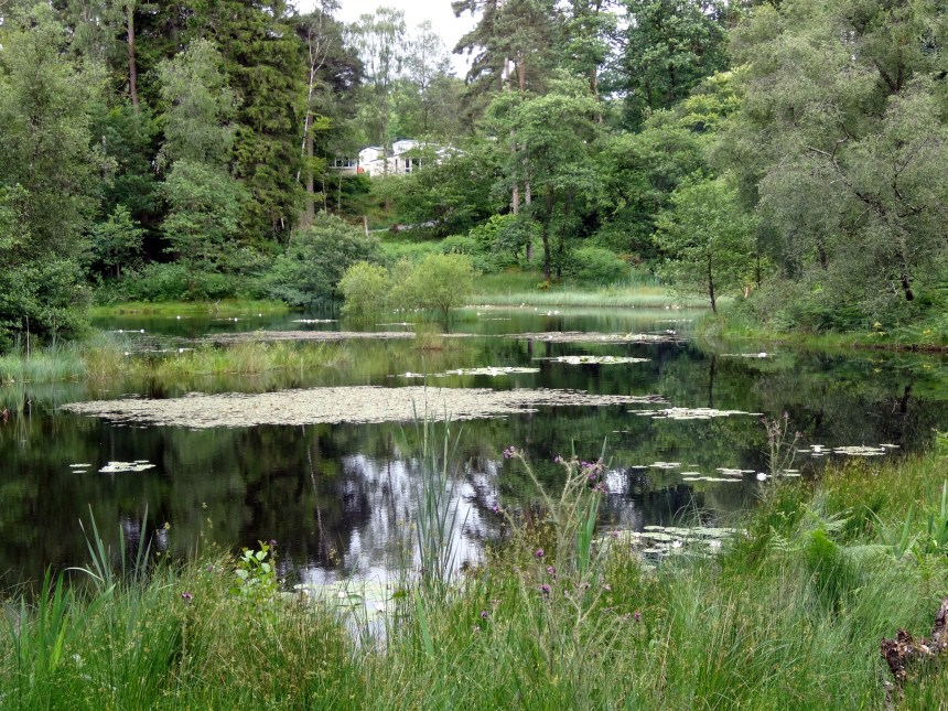 Skelwith Fold provides many tranquil stargazing locations, such as beside the park's hidden tarn in the forest
