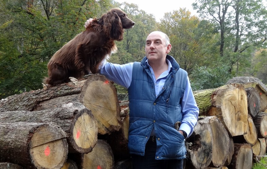 Dogs enjoy holidays as much as humans, says Henry Wild – and his sprocker spaniel Mischief would agree
