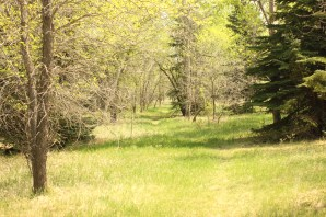 Richard St. Barbe Baker Afforestation Area Spring time