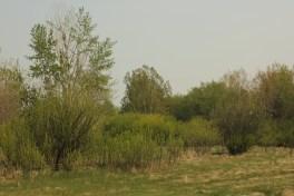 Richard St. Barbe Baker Afforestation Area, Saskatoon, SK, CA