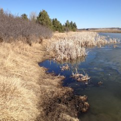 Shoreline of the West Swale Wetlands and the Riparian Woodlands Edge at the Richard St. Barbe Baker Afforestation Area, Saskatoon, SK, CA