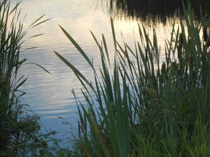 Richard St. Barbe Baker Afforestation Area and West Swale Wetlands , Saskatoon, Saskatchewan