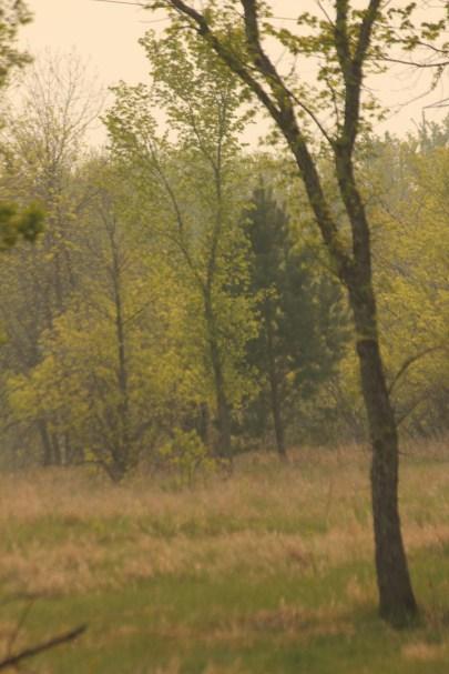Richard St. Barbe Baker Afforestation Area, Saskatoon, Saskatchewan