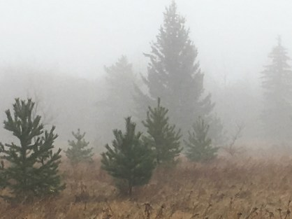 Richard St. Barbe Baker Afforestation Area in the fog