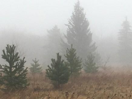 Richard St. Barbe Baker Afforestation Area in the fog