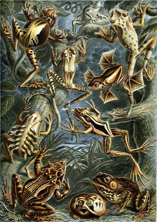 Northern Leopard Frog compared to frogs around the world. Northern Leopard Frog lower right corner
