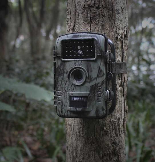 Camera ngụy trang ngoài trời treo trên thân cây