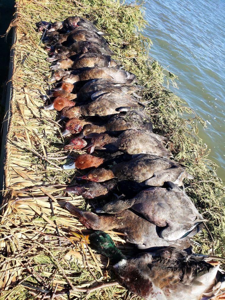 121805861 357197518934838 4607949614365262392 n 3 St. Clair Duck Hunts