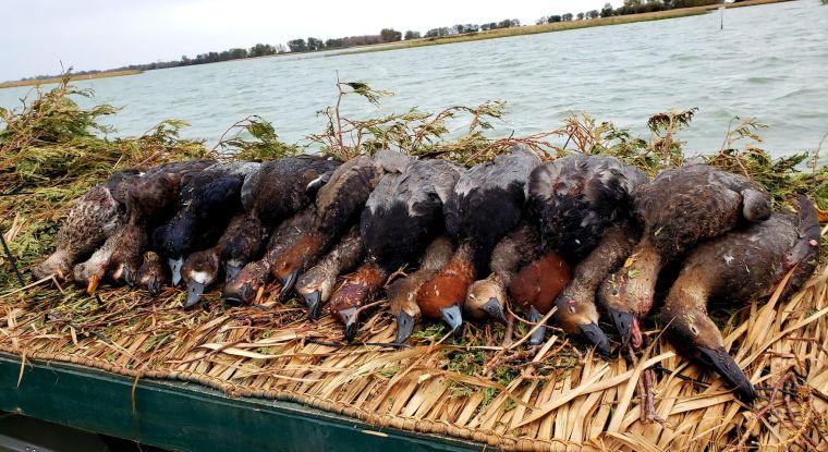 122853165 2418999881735670 6897406688541163302 n 2 St. Clair Duck Hunts