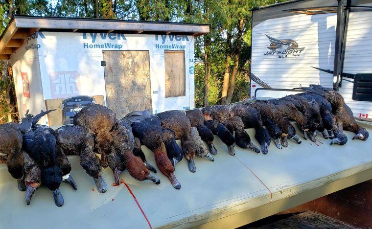 124425726 560148578162704 752896457198396110 n 2 St. Clair Duck Hunts