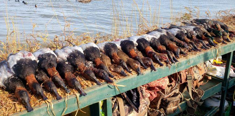 126820025 1293246281024263 1654451275515611598 n 2 St. Clair Duck Hunts