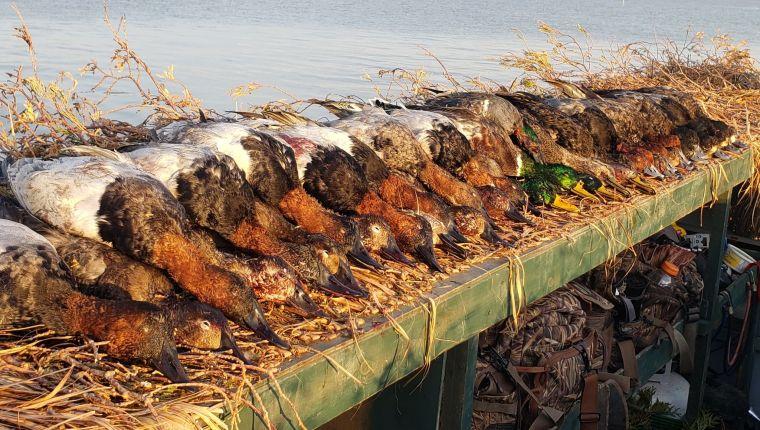 127276633 421198402388488 1917536990649420568 n 2 St. Clair Duck Hunts