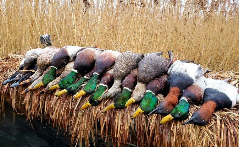 135507084 197972398458129 9099921861845222924 n 5 St. Clair Duck Hunts