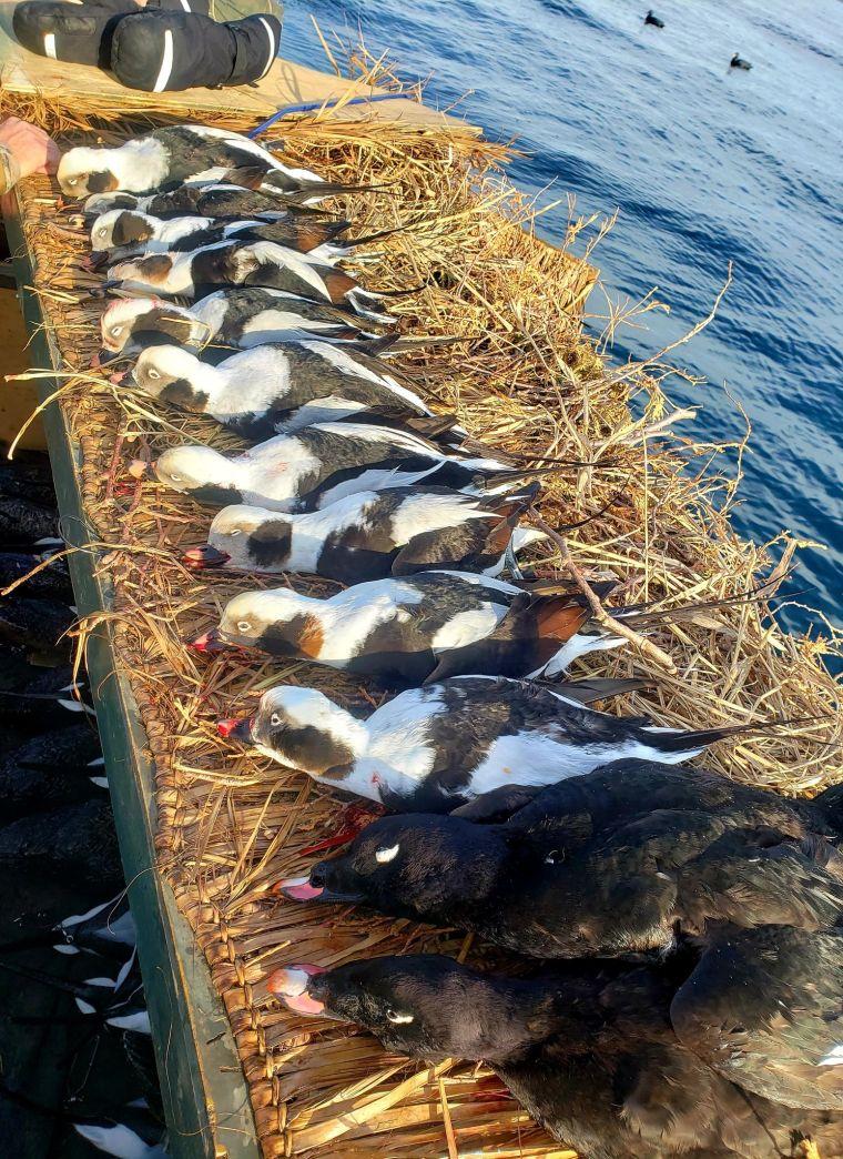 139328012 250378810014306 3632936410885924202 n 2 St. Clair Duck Hunts