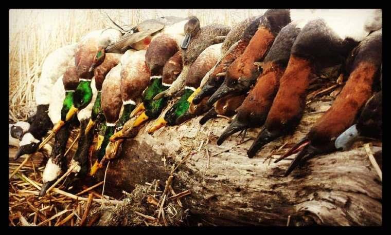 139330223 1090107904748158 4765679362756577853 n 3 St. Clair Duck Hunts