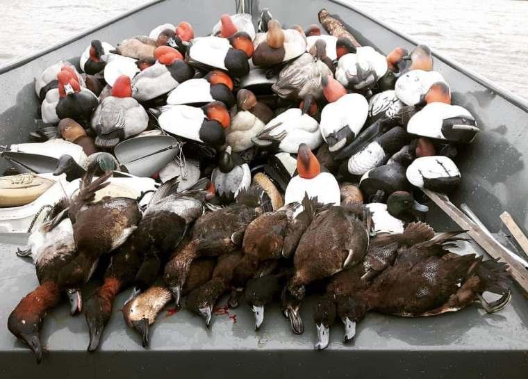 139426445 416724316106684 5281193215434075532 n 2 St. Clair Duck Hunts