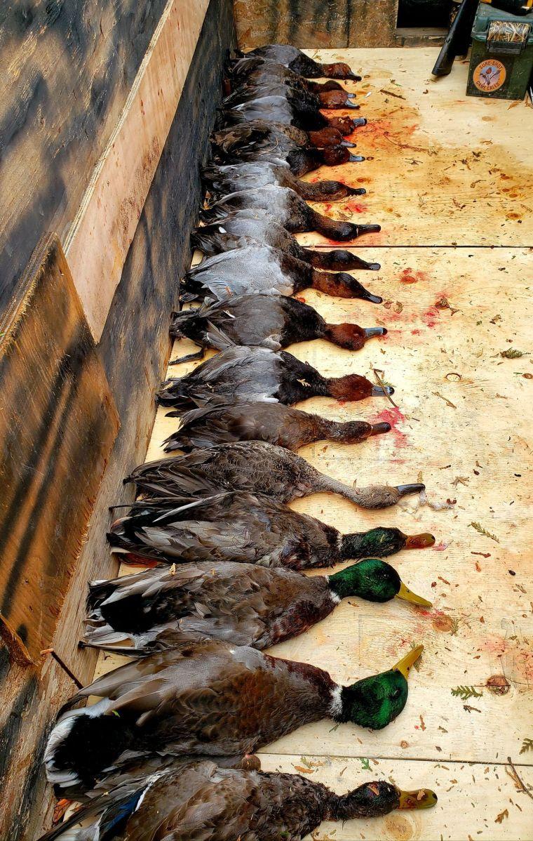 139584340 406893210546468 6345389122668262194 n 2 St. Clair Duck Hunts