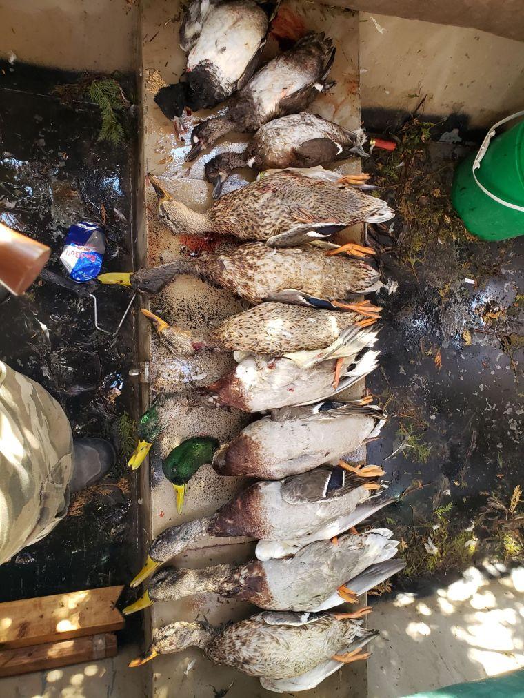 74178234 422269571802820 3910477021888643072 n 3 St. Clair Duck Hunts