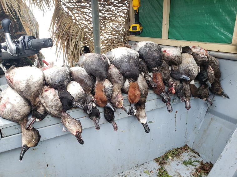 75453528 656916188046444 8532135748218912768 n 3 St. Clair Duck Hunts