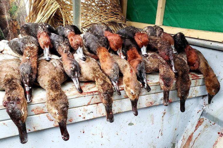 78728487 669050206955883 2556949921441775616 n 3 St. Clair Duck Hunts