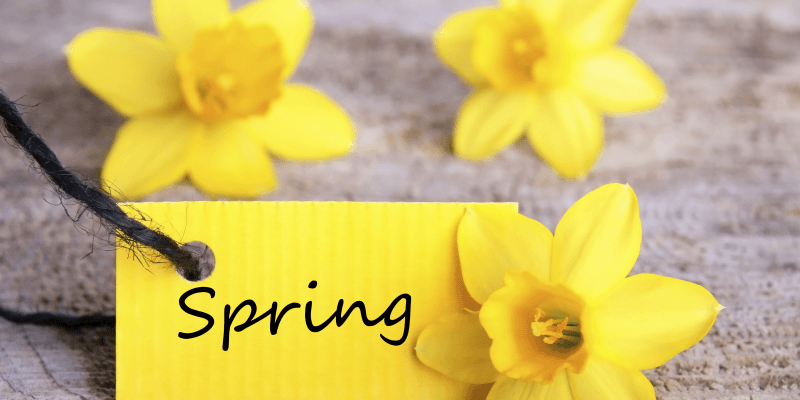 Label saying Spring surrounded by daffodils